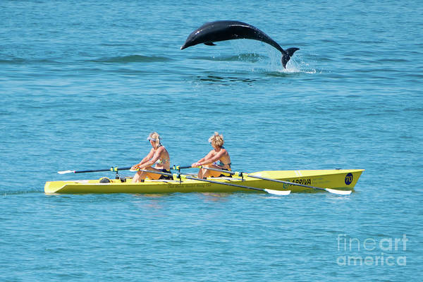 Photograph - Dolphin Leaping Over Two Rowers by Keith Morris
