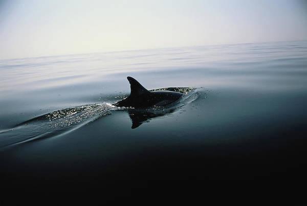 Underwater World Photograph - Dolphin, Mediterranean Sea, Spain by Tim Graham
