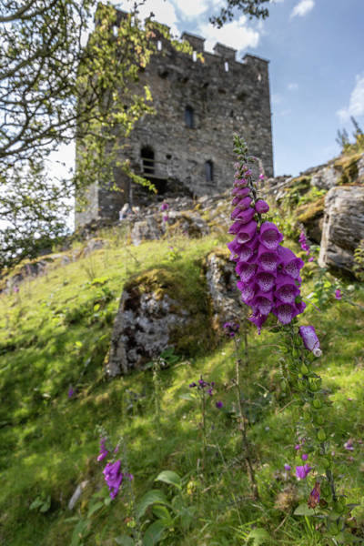 Photograph - Dolwyddelan Castle With Flower by John McGraw