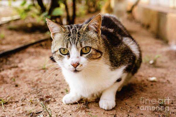 Photograph - Domestic Cat Looking At Camera by Joaquin Corbalan