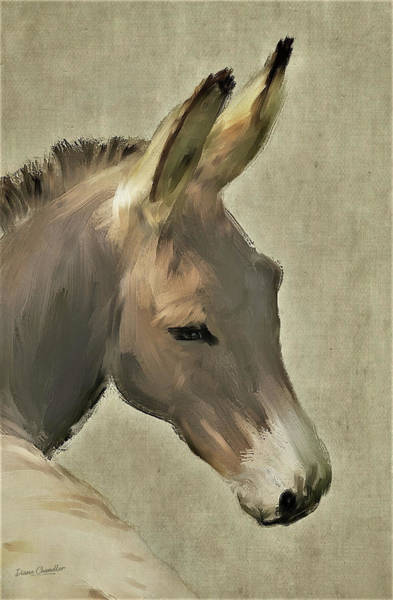 Painting - Donkey by Diane Chandler
