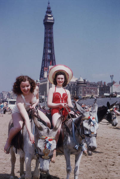 Animal Place Photograph - Donkey Rides At Blackpool by John Chillingworth