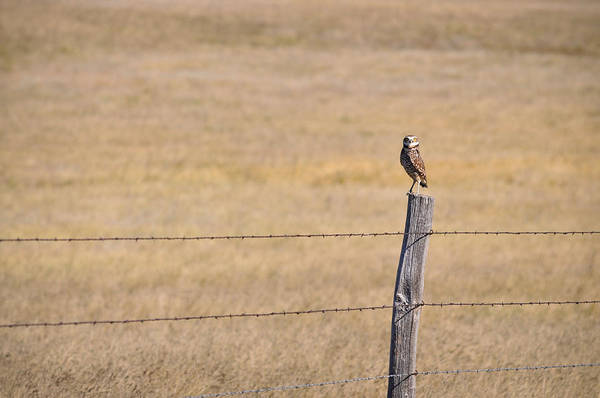 Photograph - Don't Fence Me In by Carl Young