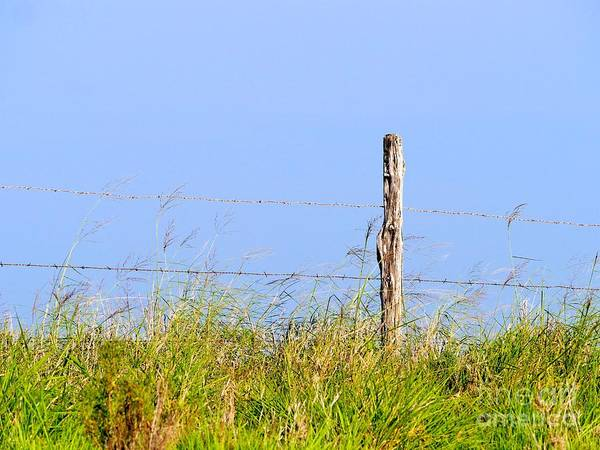 Wall Art - Photograph - Don't Fence Me In by Gary Richards