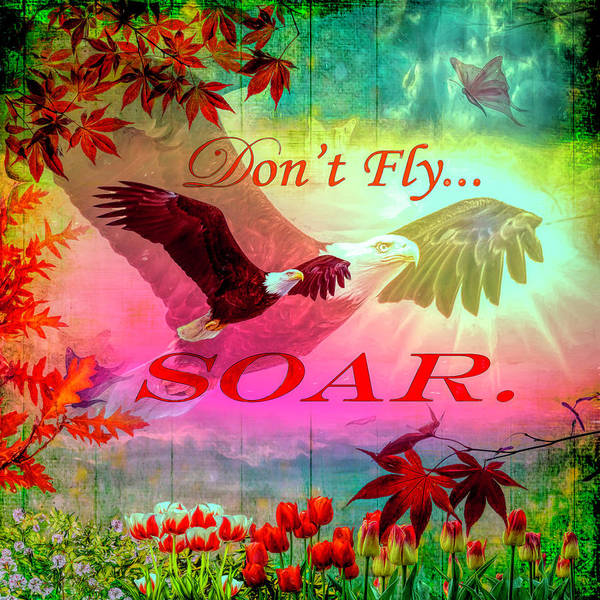 Photograph - Don't Fly, Soar by Debra and Dave Vanderlaan
