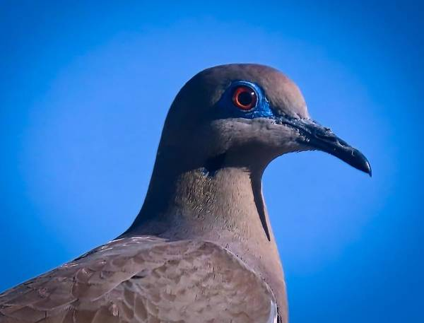 Photograph - Don't It Make My Brown Eyes Blue by Judy Kennedy
