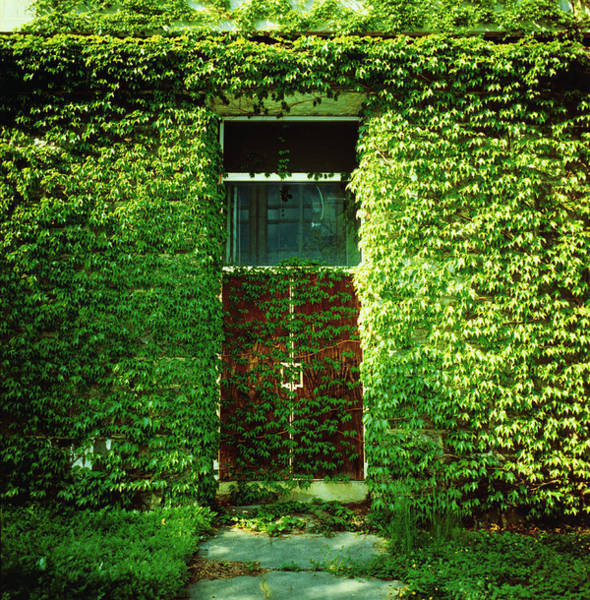 Doors Covered By Ivy Art Print by Silvia Otte
