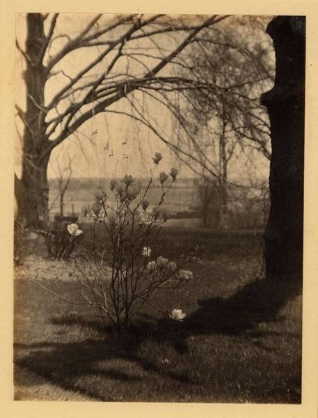 Wall Art - Painting - Doris Ulmann   1882-1934 , Madison County, Ky. Small Flowering Tree  Magnolia  Surrounded By Larger  by Doris Ulmann