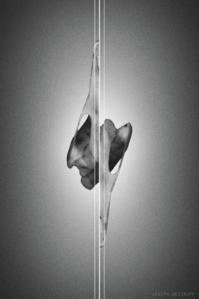 Figurative Abstract Photograph - Dormiveglia Black - Surreal Abstract Bird Skull And Lines by Joseph Westrupp