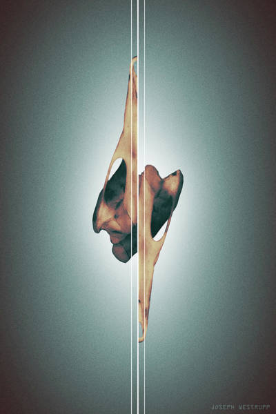 Figurative Abstract Photograph - Dormiveglia - Surreal Abstract Bird Skull And Lines by Joseph Westrupp