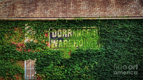 Photograph - Dorrance Warehouse Ivy by Janice Pariza
