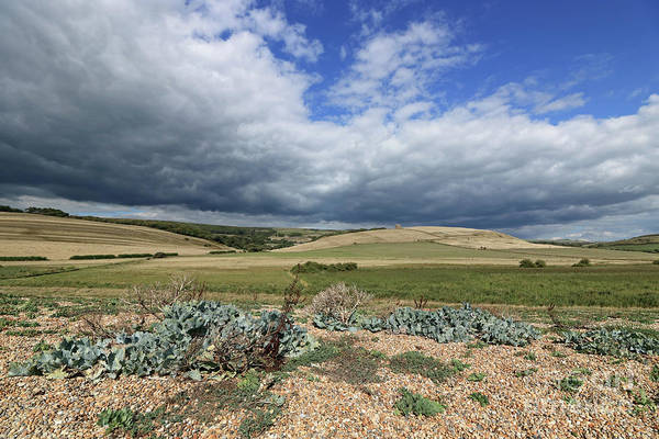 Photograph - Dorset Landscape by Julia Gavin