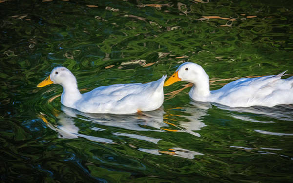 Photograph - Dos Duckies by Keith Smith