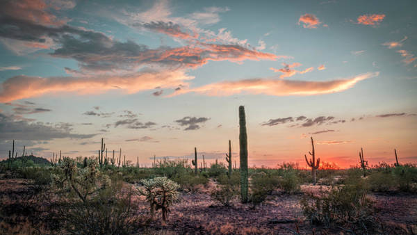 Photograph - Dotting The Desert by Laura Hedien