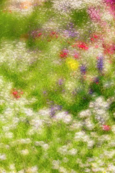 Wall Art - Photograph - Double Exposure Soft Focus On Flowers by Adam Jones