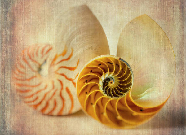 Wall Art - Photograph - Double Nautilus by Garry Gay