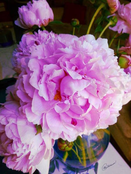 Photograph - Double Peonies by Elly Potamianos