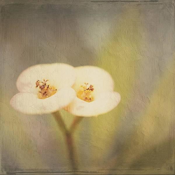 Digital Art - Double Tenderness by Silvia Marcoschamer
