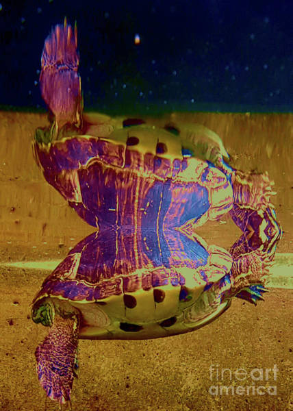 Wall Art - Photograph - Double Turtle by Nubes DesignCH