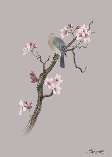Wall Art - Digital Art - Dove In Cherry Tree by Spadecaller