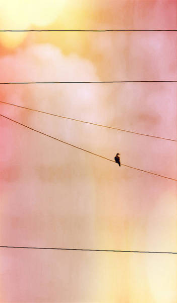 Photograph - Dove On A Wire by Judy Kennedy