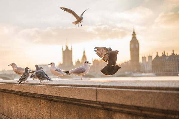 Photograph - Doves And Seagulls Over The Thames In London by Top Wallpapers