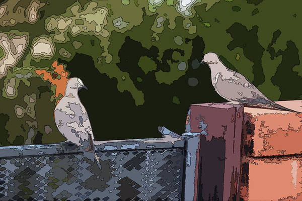 Photograph - Doves On A Fence Posterized  by Chance Kafka