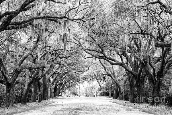 Photograph - Down Oak Avenue At Charles Towne Landing by John Rizzuto