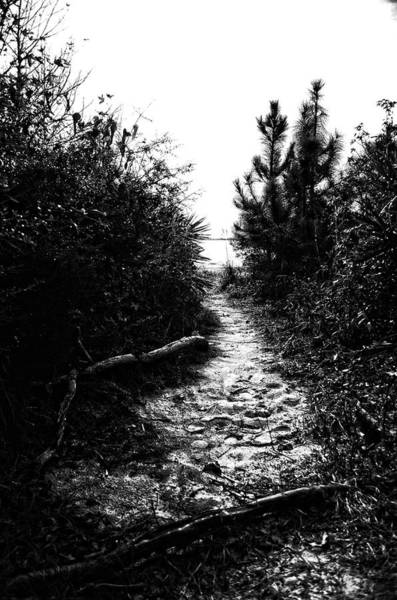 Photograph - Down The Trail by Maggy Marsh