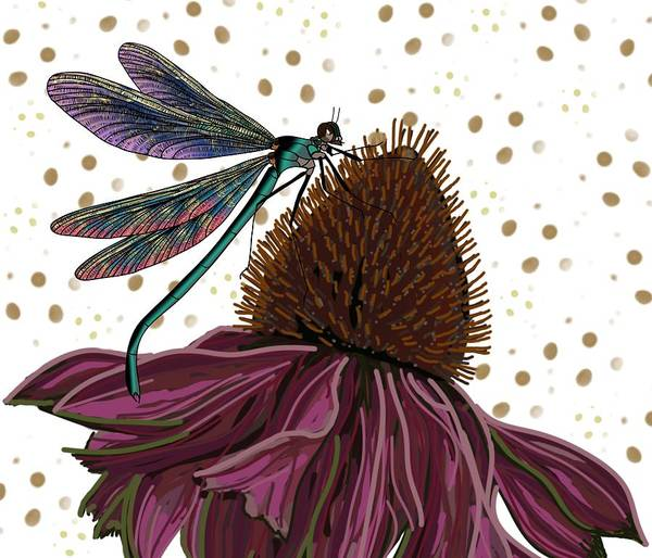 Drawing - Dragon Fly And Echinacea Flower by Joan Stratton
