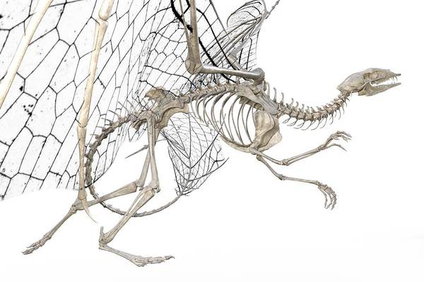 Wall Art - Digital Art - Dragon Skeleton  by Betsy Knapp