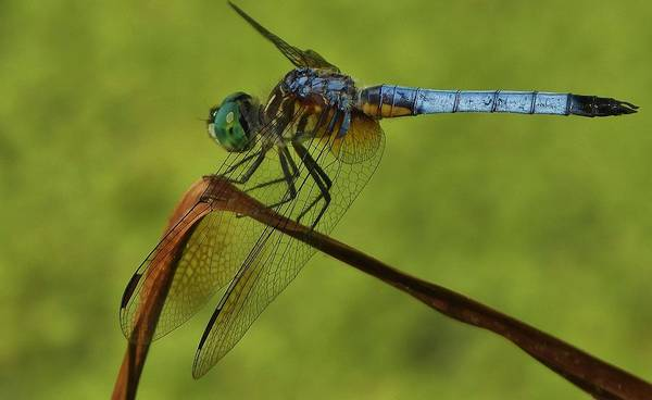 Wall Art - Photograph - Dragonfly 99 by Todd Sherlock