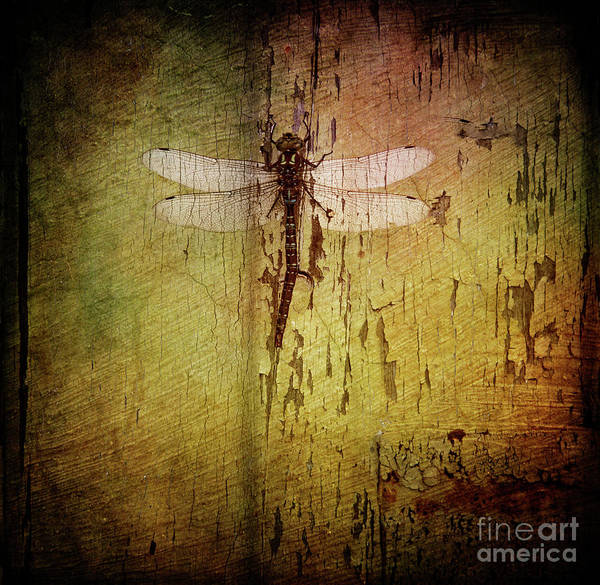 Photograph - Dragonfly by Debra Fedchin