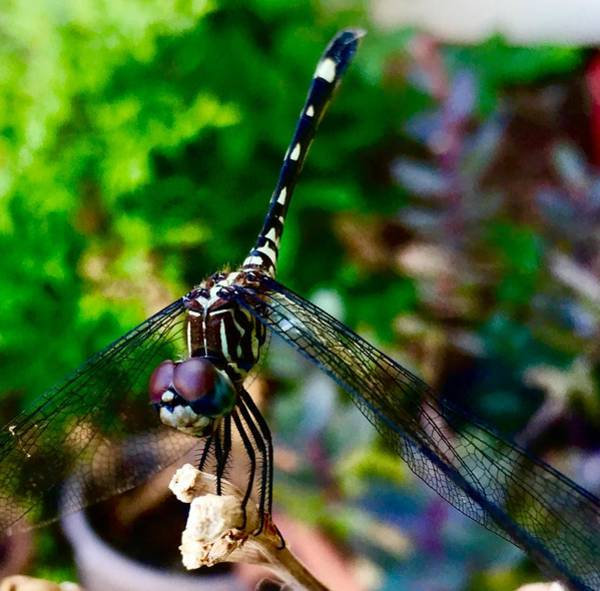 Wall Art - Photograph - Dragonfly In Miniature by Toni Hopper