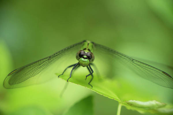 Photograph - Dragonfly by Karen Rispin