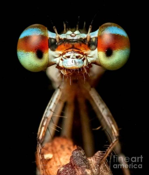 Digital Art - Dragonfly by Michael Graham