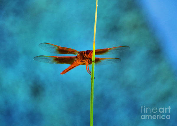 Wall Art - Photograph - Dragonfly Resting On A Stem by Jeff Swan