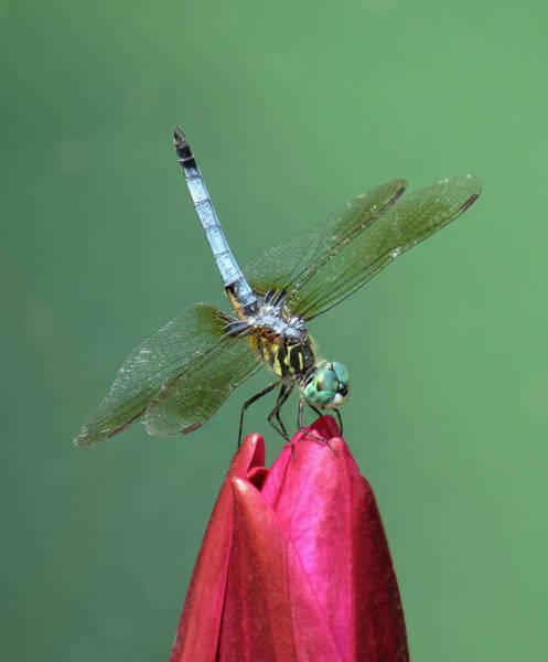 Wall Art - Photograph - Dragonfly - Summer's Edge 04 by Pamela Critchlow