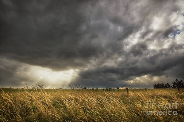 Wall Art - Photograph - Dramatic Sky Over Yellow Meadow by Carl Street
