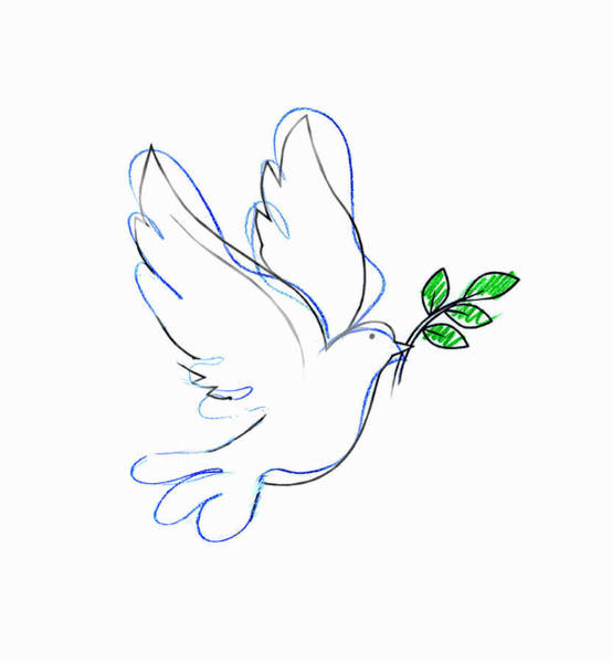 Branch Digital Art - Drawing Of Dove Carrying Olive Branch by Gary Waters