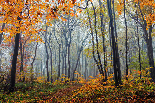 Photograph - Dream Forest by Evgeni Dinev