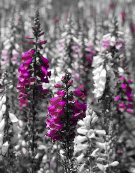 Photograph - Dreaming  Of Fields Of Foxgloves by Lynda Anne Williams