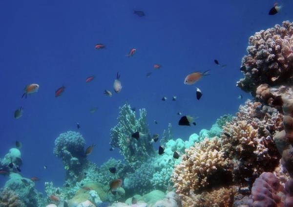 Photograph - Dreaming Of The Underwater World by Johanna Hurmerinta