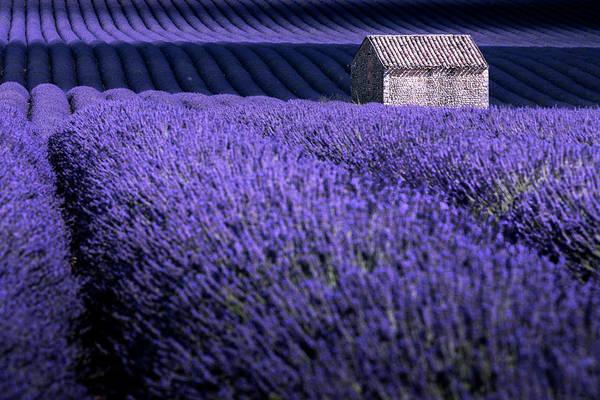 Photograph - Dreaming Purple by Francesco Riccardo Iacomino