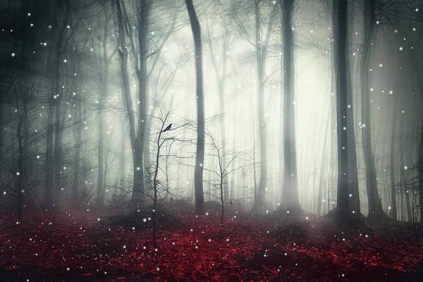 Photograph - Dreaming Woodland by Dirk Wuestenhagen