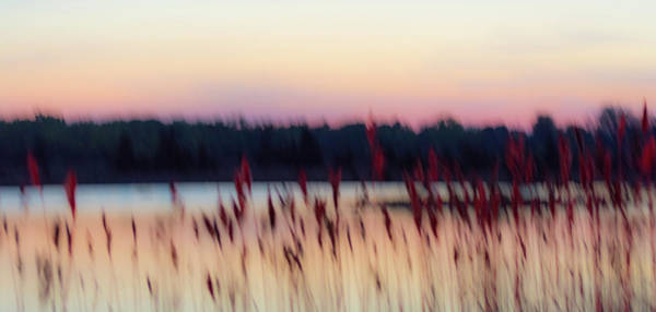 Photograph - Dreams Of Nature by Stewart Helberg