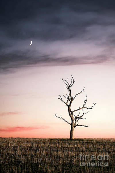 Wall Art - Photograph - Dreams Of The Dead Tree by Evelina Kremsdorf