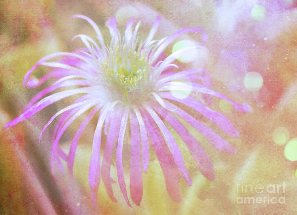Wall Art - Photograph - Dreamy .. .floral  by Elaine Manley