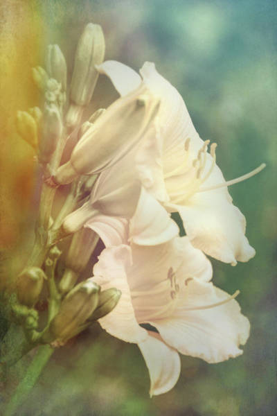 Photograph - Dreamy Lilies by Leda Robertson
