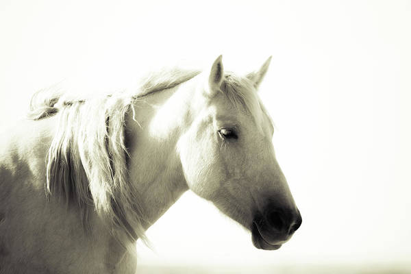 Photograph - Dreamy Mare by Mary Hone